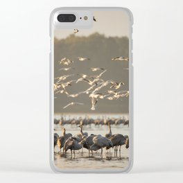 Common Cranes at sunrise Clear iPhone Case