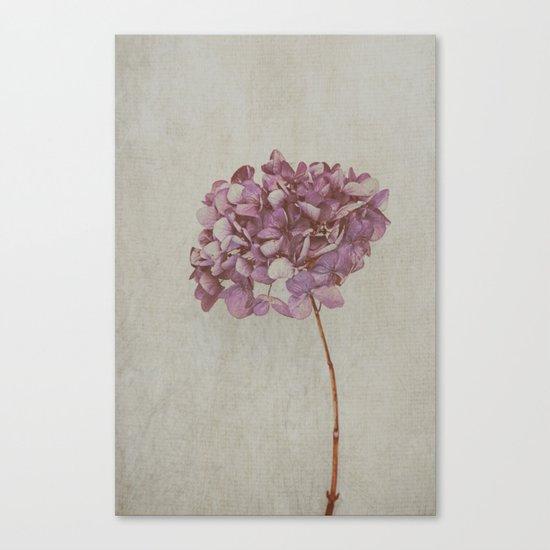Beautiful Vintage Hydrangea Canvas Print