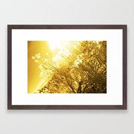 Sunshine Framed Art Print
