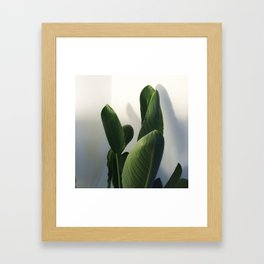 Strelitzia Framed Art Print