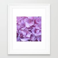 hydrangea Framed Art Prints featuring Hydrangea by lillianhibiscus