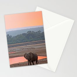 Walk in the evening light, Africa wildlife Stationery Cards