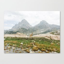 Deer in Front of Teton Mountains Canvas Print