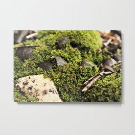 Stills-moss1 Metal Print