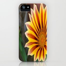 Close Up Tiger Gazania in Red, Gold and Green  iPhone Case