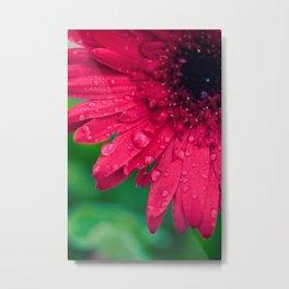 Raindrop Daisy Metal Print