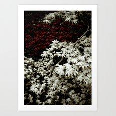 Japanese Maples Art Print