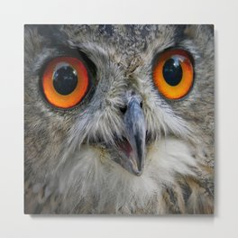 Owl Close up Metal Print