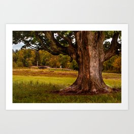 Roots - Minute Man National Park, MA Art Print