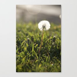 But for the Sun Canvas Print
