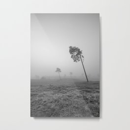 oblique trees in the fog I NP Maasduinen I Netherlands I photo art print  Metal Print