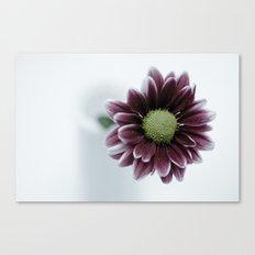 Drops on a Daisy Canvas Print