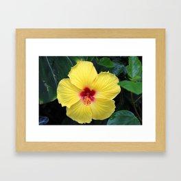 Maʻo hau hele Framed Art Print