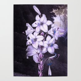 The White Lily w/ Variegated-leaves Lavender Temple of Flora Poster