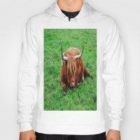 buffalo Hoodies featuring buffalo by  Agostino Lo Coco