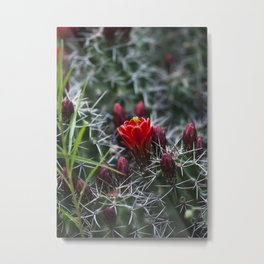 Red Cactus Flower Metal Print