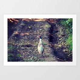 Pheasant on the farm Art Print