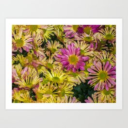 Messed Up Flowers Art Print