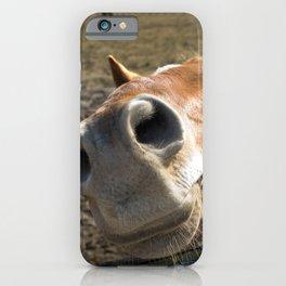 Nosy Horse Farm / Domestic Animal Photograph iPhone Case