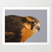 falcon Art Prints featuring Falcon by DiDi Higginbotham
