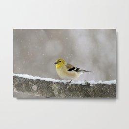 Winter Goldfinch Metal Print
