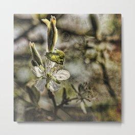 Spring Bossoms II Metal Print