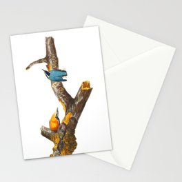 Red-breasted Nuthatch Bird Stationery Cards