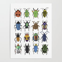 Beetle Species Poster
