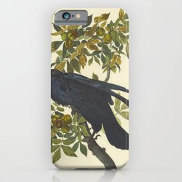 RAVEN AUDUBON Large 25x38 inch Corvus Corax Bird Print - shagbark hickory - Botanical Poster Nature Print Illustration Plate iPhone Case