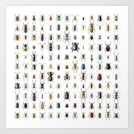 Beetlemania / Get your entomology on! Art Print