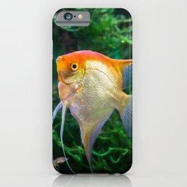 Pterophyllum Scalare yellow angel tropical fish underwater with plants iPhone Case