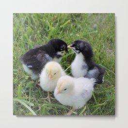 Four lovely chicks Metal Print