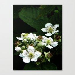Fraises des bois Flowers Canvas Print