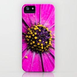 Dimorphotheca iPhone Case