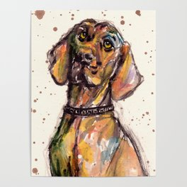 Hungarian Vizsla Dog Closeup Poster