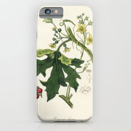 English mandrake (Bryonia dioica)  from Medical Botany (1836) by John Stephenson and James Morss Chu iPhone Case