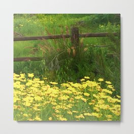 Daisies and Plumes at the Split Rail Fence Metal Print