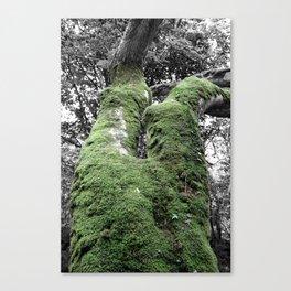 Nature | Black and White, Colour Pop Photography Canvas Print