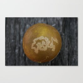 Orangesnake Canvas Print
