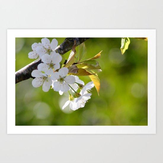 Light of spring - photography Art Print