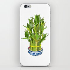 Lucky Bamboo in Porcelain Bowl iPhone & iPod Skin
