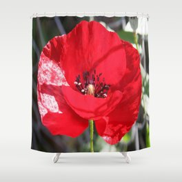 Single Red Poppy Flower  Shower Curtain