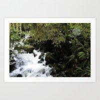 Road to Milford Sound Art Print