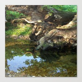 River Tree Canvas Print
