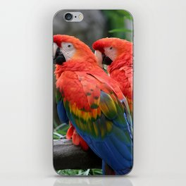 Scarlet Macaw iPhone Skin