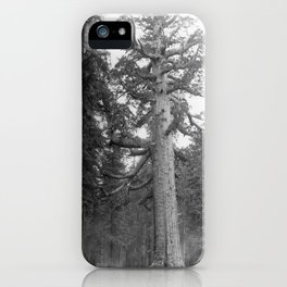 """""""Grizzley Giant"""", a Big Tree in Mariposa Grove in Yosemite National Park, California, ca.1902 iPhone Case"""