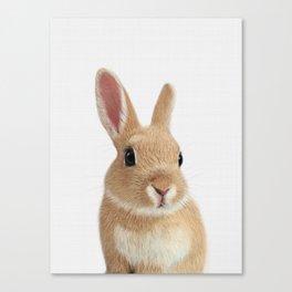 Bunny rabbit print Canvas Print