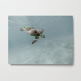 sea turtle ii Metal Print