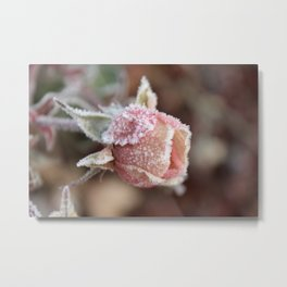 Frosted Pink Rose Metal Print