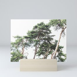 Scots pine trees Mini Art Print